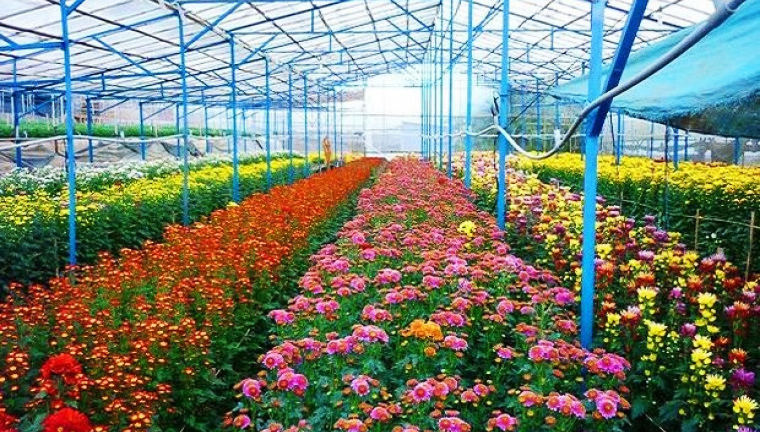 4. Langbiang Flower Farm