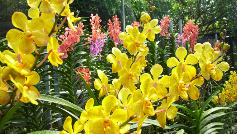 5. Anh Quynh Orchid Farm